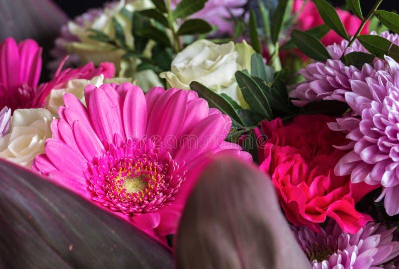 Jefe de la flor de la margarita del gerbera Foto macra 1 foto de archivo libre de regalías