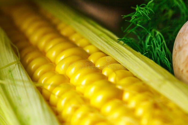Jefe del foco suave del primer amarillo del maíz fotografía de archivo libre de regalías