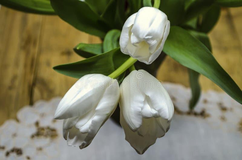 Jefes blancos de tulipanes grandes con los troncos y de hojas contra la perspectiva de una servilleta bordada que miente en table fotos de archivo libres de regalías