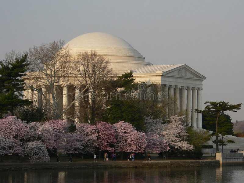 Jefferson Memorial Blossoms stock photography