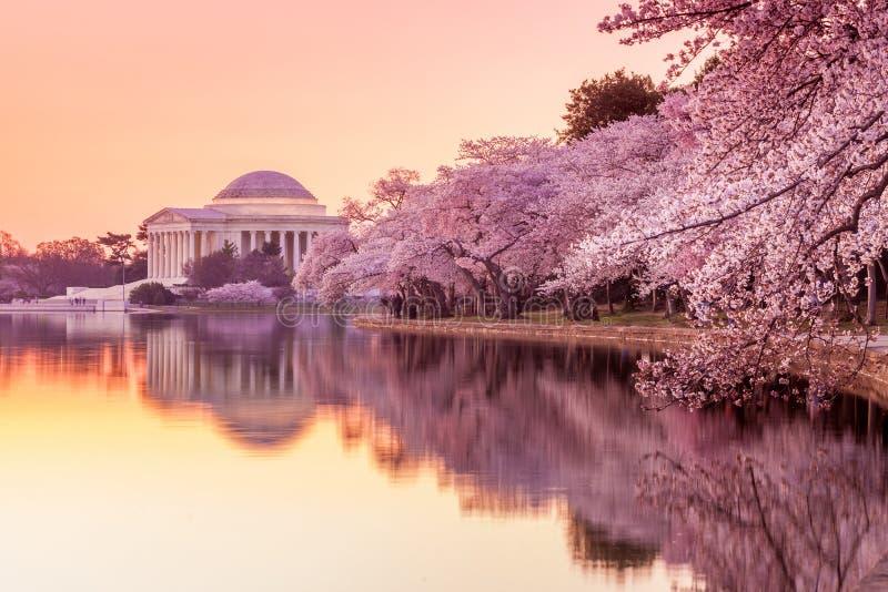 Jefferson Memorial durante Cherry Blossom Festival foto de stock