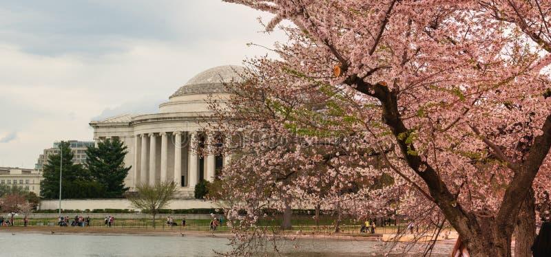 Jefferson Memorial e la gente che godono dei fiori del bacino di marea fotografie stock
