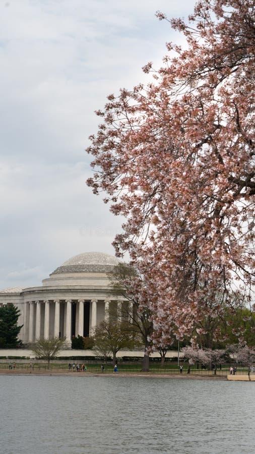 Jefferson Memorial e la gente che godono dei fiori del bacino di marea fotografia stock