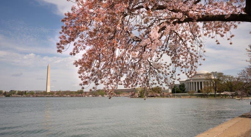 Jefferson Memorial e Washington Monument intorno al bacino di marea fotografie stock