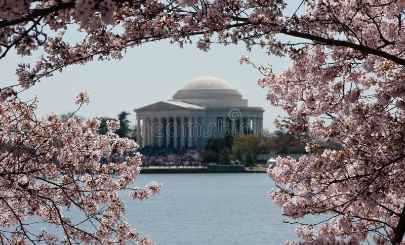 Download Jefferson Memorial Framed By Blossoms Stock Image - Image of plane, city: 8846155