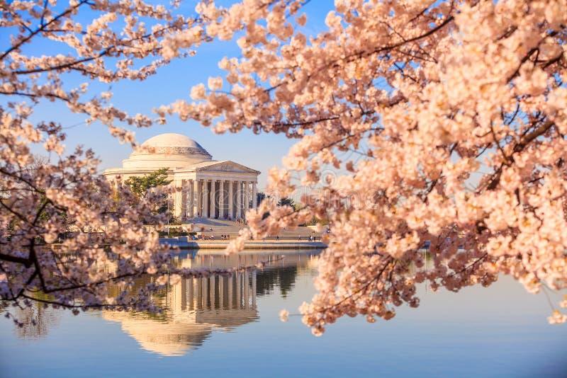 Jefferson Memorial tijdens Cherry Blossom Festival stock foto