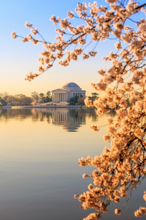 Jefferson Memorial tijdens Cherry Blossom Festival stock foto's