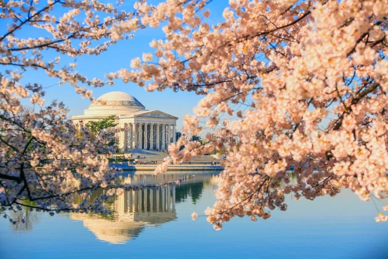 Jefferson Memorial tijdens Cherry Blossom Festival stock fotografie