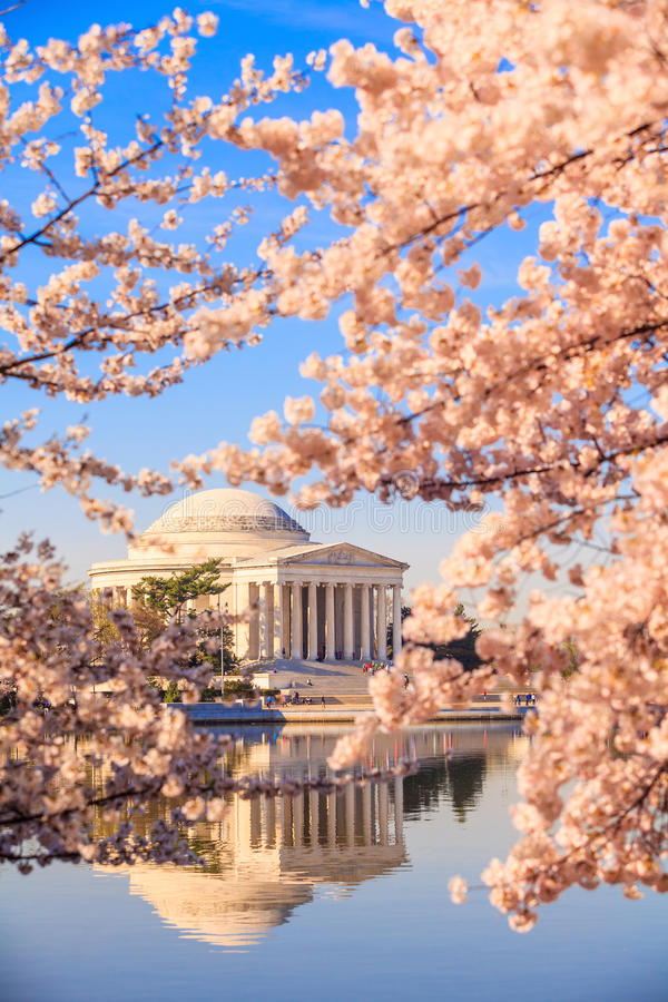 Jefferson Memorial under Cherry Blossom Festival royaltyfri fotografi