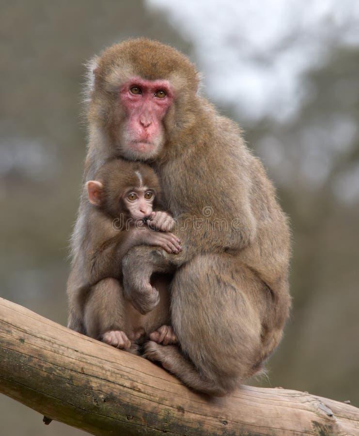 jej matka małpia dziecko obrazy royalty free