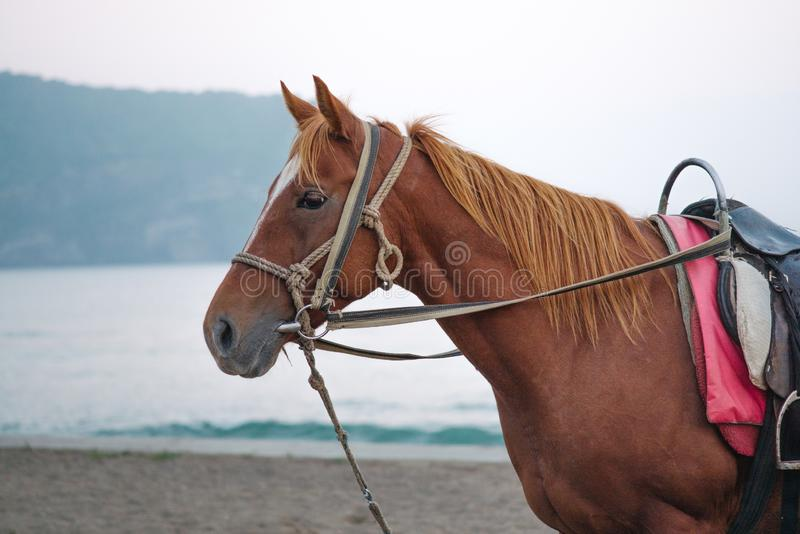A brown horse standing on a beachside stock photos