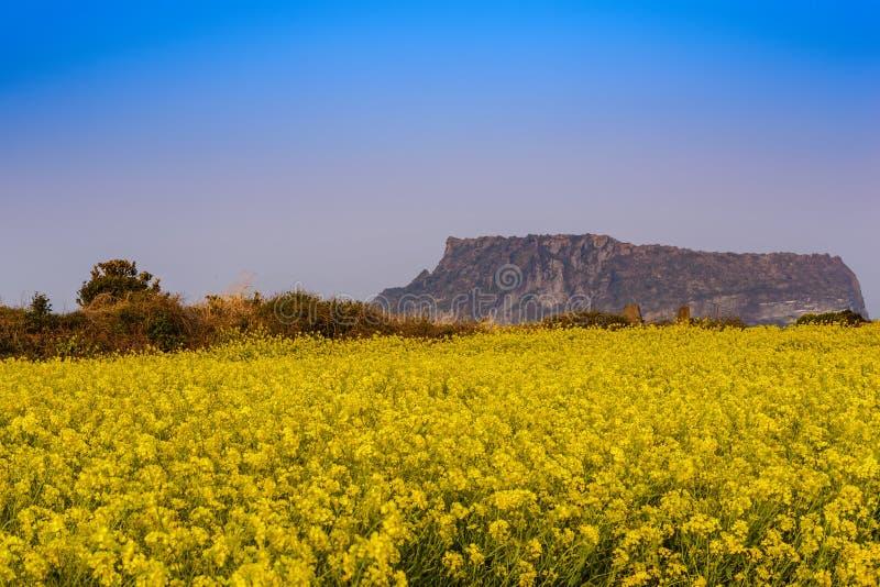 Jeju wyspa zdjęcie stock