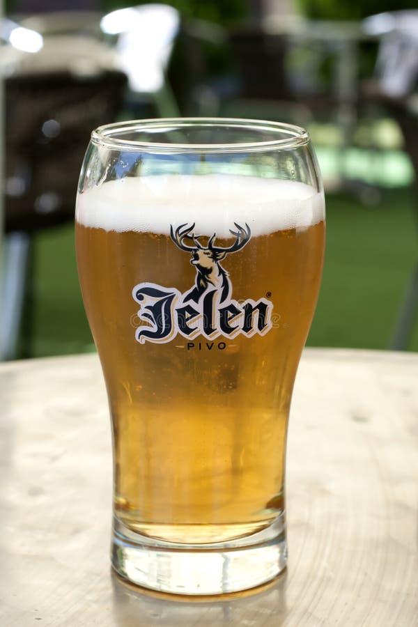 Jelen Beer - The One Of The Best Beer in Serbia. Jelen Beer in Serbia, Belgrade. This is the mark of beer in Serbia stock images