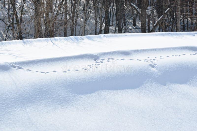 Jeleni odcisk stopy na śnieżnym halnym wzgórzu w hokkaido Japonia zdjęcie stock