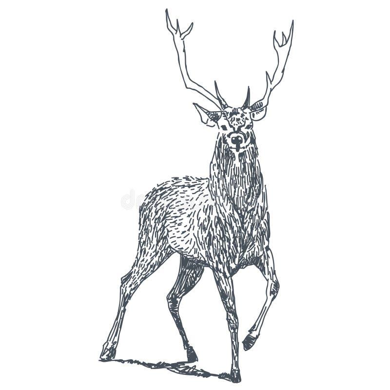 Jeleni rysunek ilustracja wektor