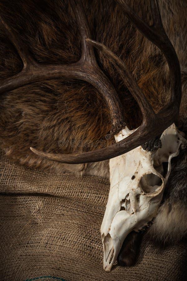 Jelenia czaszka na Burlap i futerku obrazy royalty free