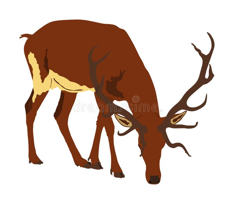 jelenia ilustracja odizolowywaj?ca na bia?ym tle Renifer, dumna Szlachetna Jelenia samiec w lesie lub zoo, Pot??na samiec ilustracja wektor