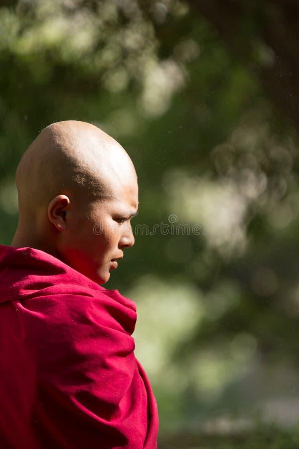 从Jelichun女修道院的体贴的认真年轻佛教尼姑,赞成 免版税库存图片