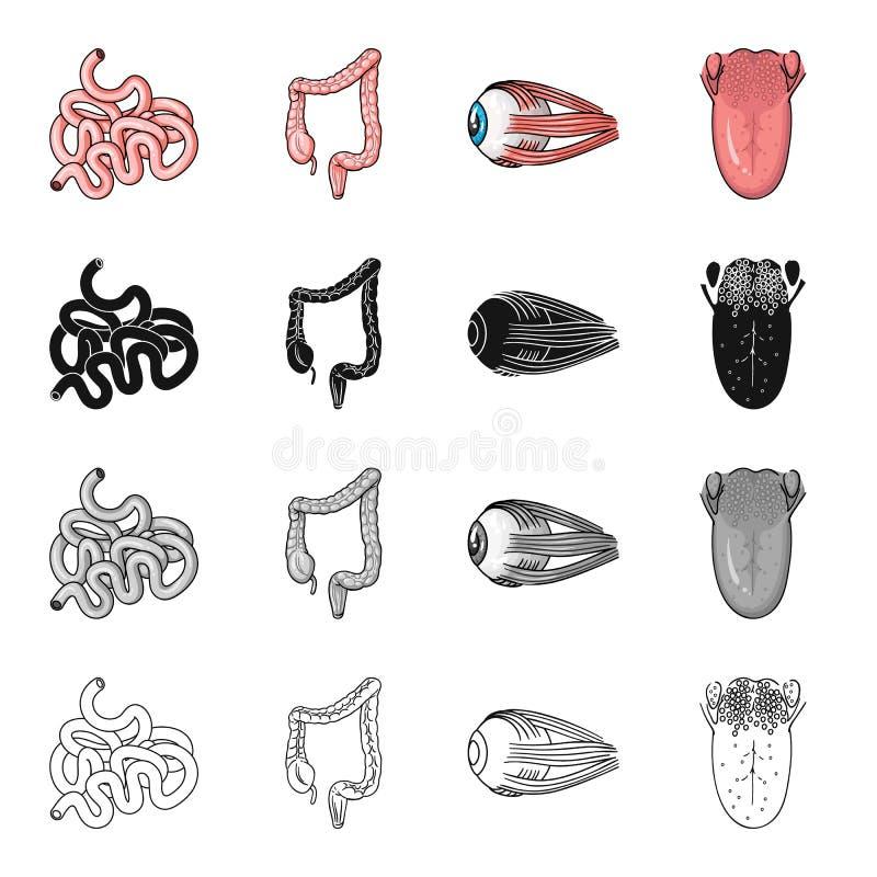 Jelito, wewnętrzny organ, dwunastnica, ludzki oko, jęzor i tonsils, Ludzcy organy ustawiają inkasowe ikony w kreskówki czerni ilustracji