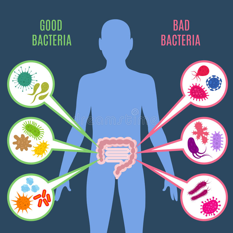 Jelitowe flory patroszyją zdrowia wektorowego pojęcie z bakteriami i probiotics ikonami royalty ilustracja