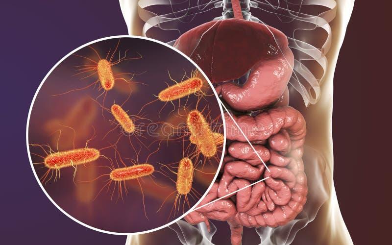 Jelitowy microbiome, Escherichia Coli royalty ilustracja