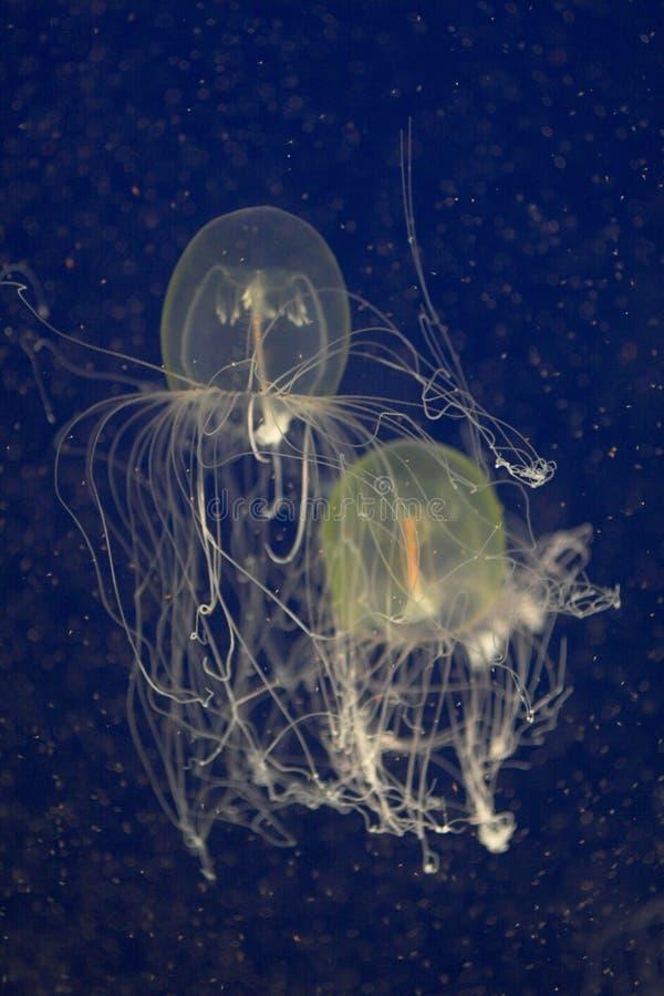 Jelly fish stock photos