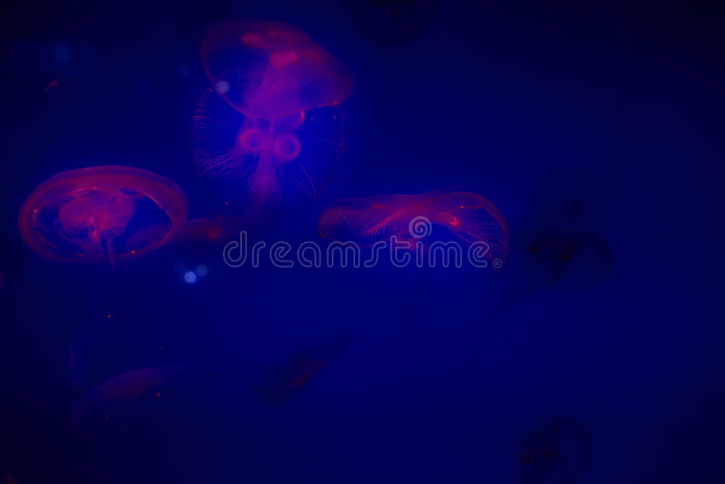 Jelly Fish fotos de stock royalty free