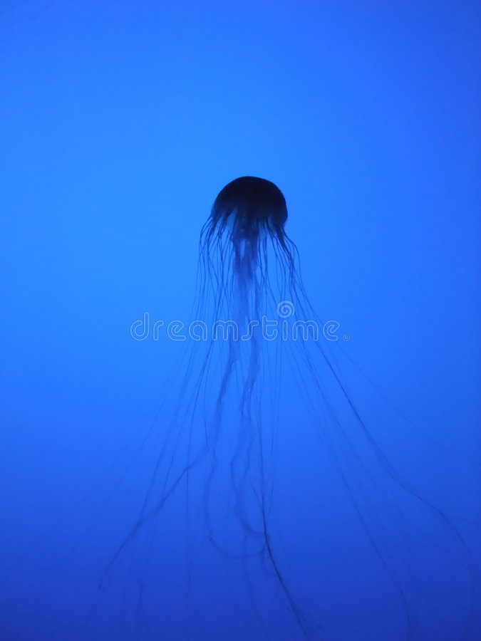 Jelly Fish SIlhouette royalty free stock image