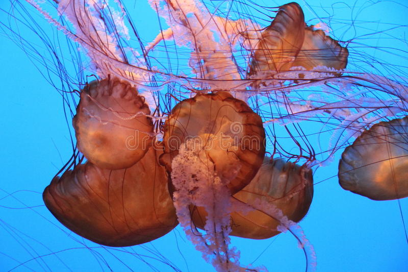 Download Jellyfish stock image. Image of pink, jelly, aquarium - 25877421