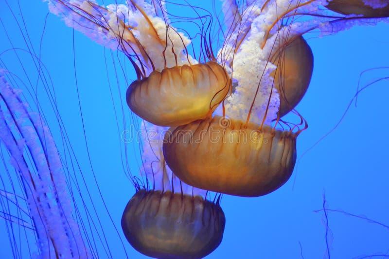 Jellyfish In Aquarium Free Public Domain Cc0 Image