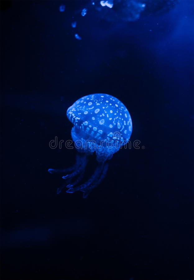 Download Jellyfish In The Dark Water With Lights Stock Photo - Image: 13721064