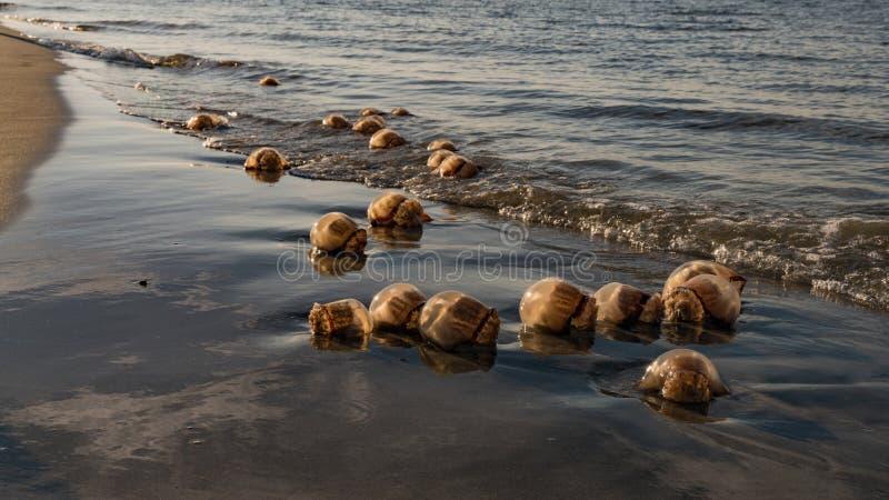 Jellyfish głupoty plaża obraz royalty free