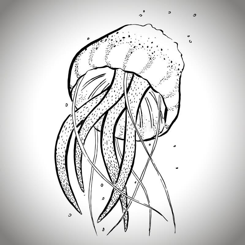 Jellyfish graficzny nakreślenie; wektorowa ilustracja EPS10 zdjęcie royalty free