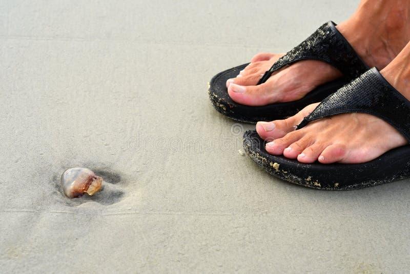 Jellyfish i sandały na Hilton głowy wyspie Wyrzucać na brzeg obrazy royalty free