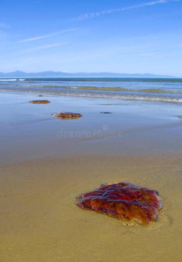 Jellyfish on sand stock photo