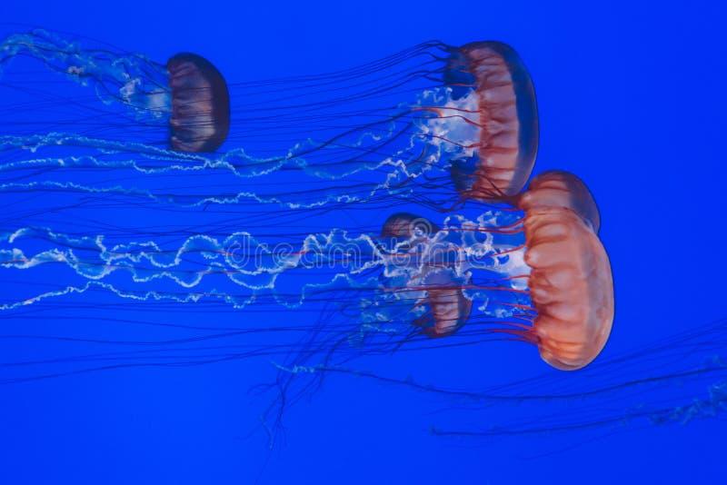 Jellyfish In Sea Free Public Domain Cc0 Image