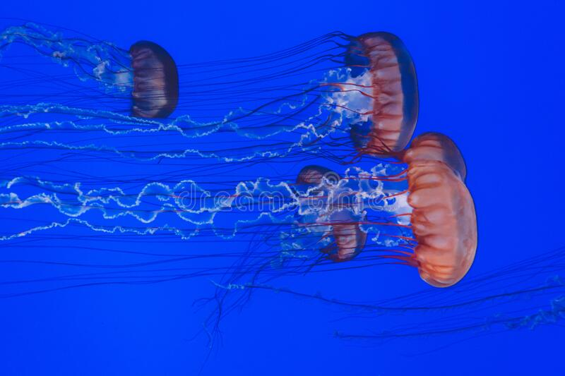Jellyfish in sea stock photos
