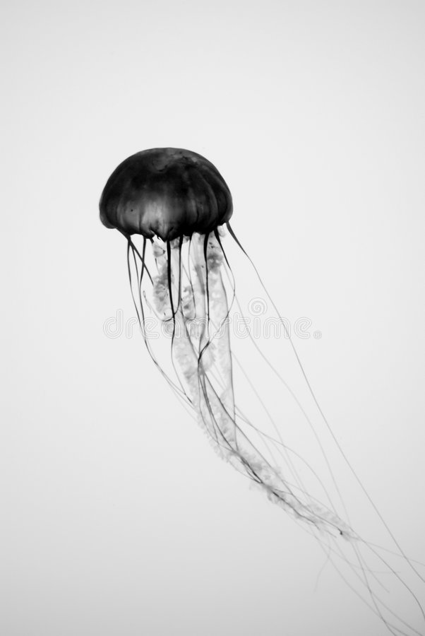 Jellyfish Silhouette stock photo