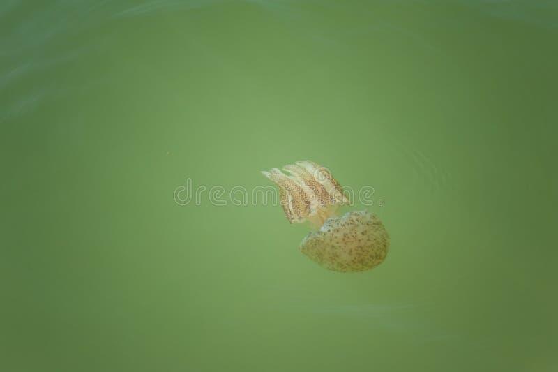 Jellyfish. stock photo