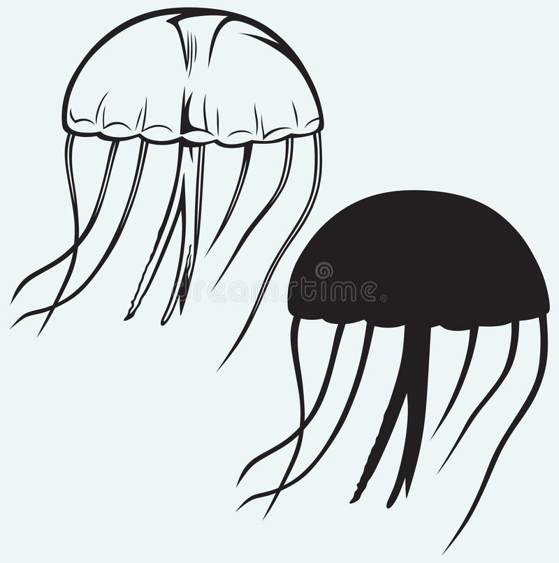 jellyfish vector stock vector illustration of exotic 37858853 rh dreamstime com jellyfish vectorial jellyfish vector free