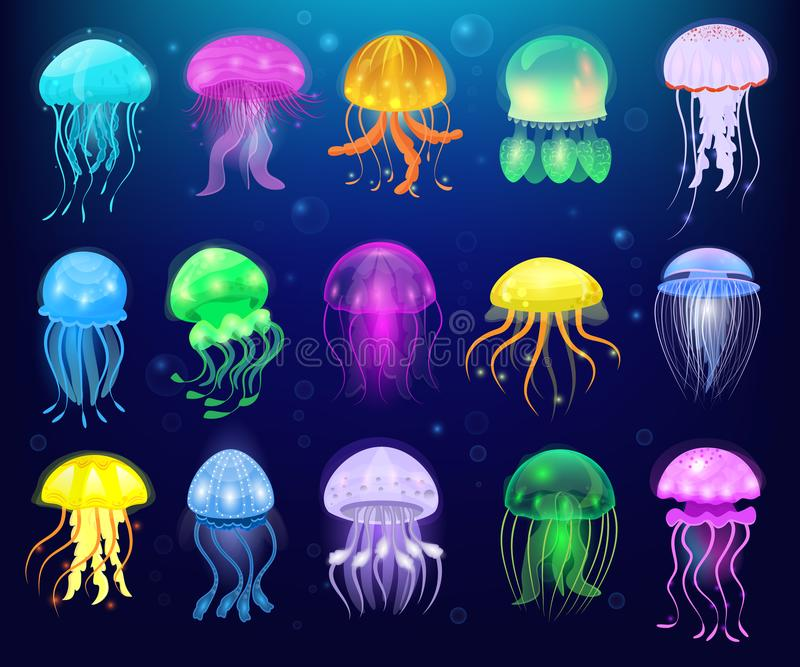 Jellyfish vector ocean jelly-fish or sea-jelly and underwater nettle-fish or medusae illustration set of exotic. Jellylike glowing medusa or fish in sea vector illustration