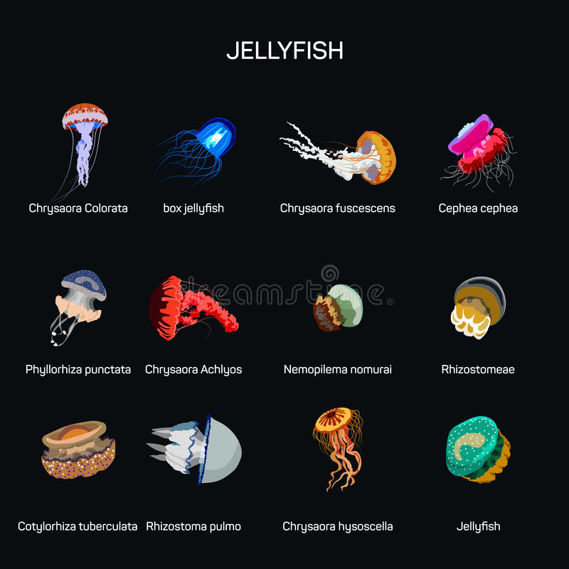 Jellyfish vector set in flat style design. Different kind of underwater life species icons collection. stock illustration