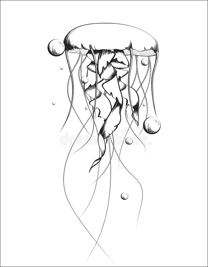 Jellyfish vector sketch drawn in black and white style royalty free illustration