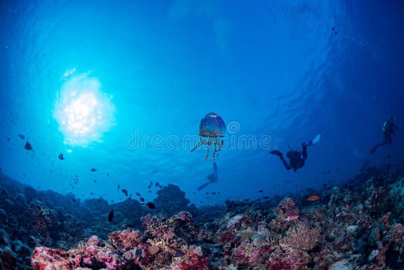 Jellyfish w Maldives koralach i Rybiej podwodnej panoramie fotografia stock