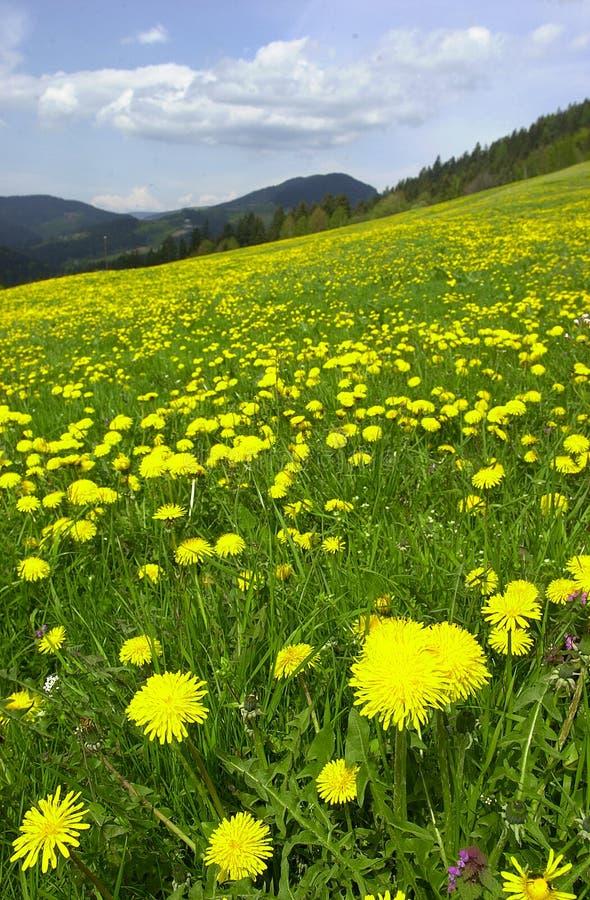Jelow Blumen stockfotos