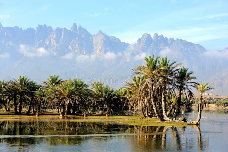 Jemen. Socotra wyspa zdjęcia royalty free
