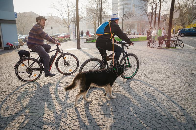 Jena, Germany. March 23 2019. Seniors riding bicycles with a big dog stock photography