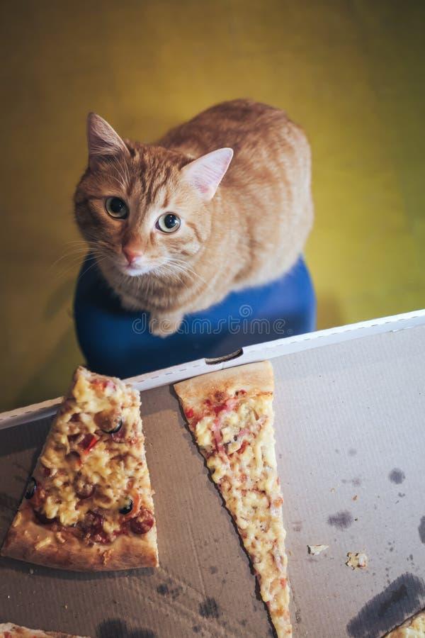 Jengibre y pizza fotos de archivo libres de regalías