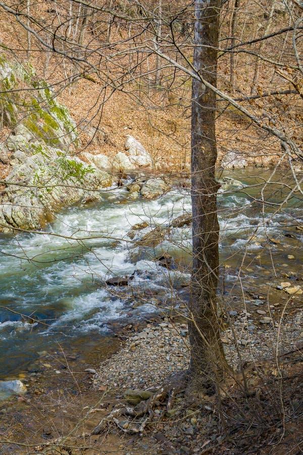 Jennings Creek – A Wild Mountain Trout Stream. Jennings Creek is a popular wild mountain trout stream located in the Blue Ridge Mountains, Botetourt stock photos