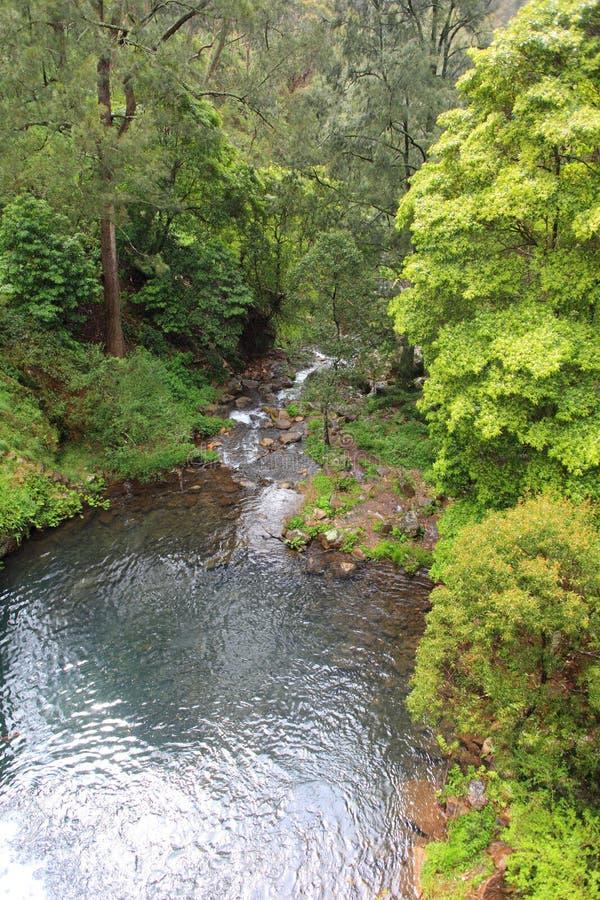 Jenolan flod downstream arkivfoto